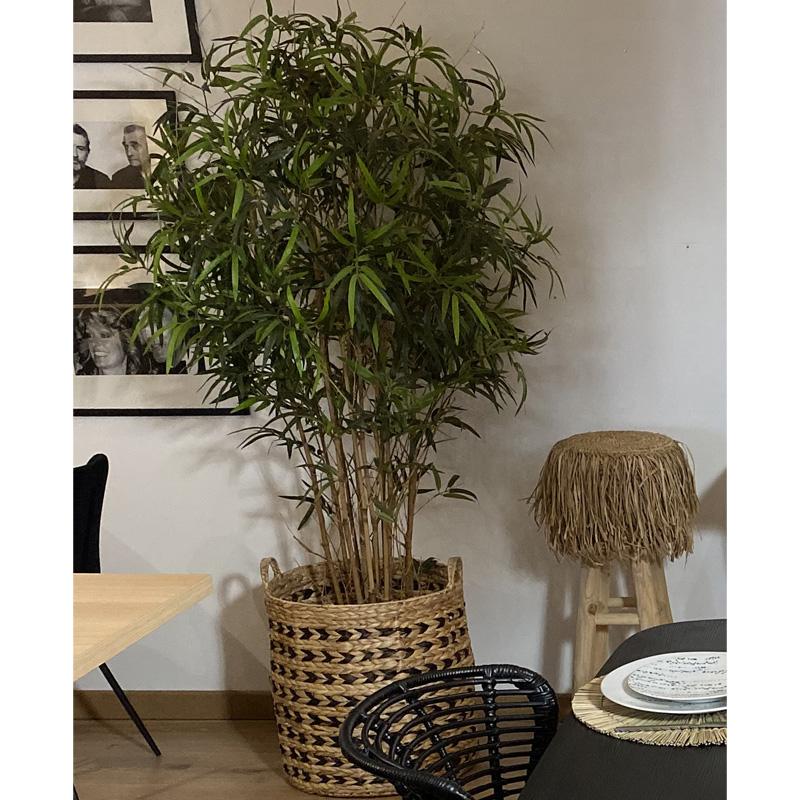 Bambou Ambiance