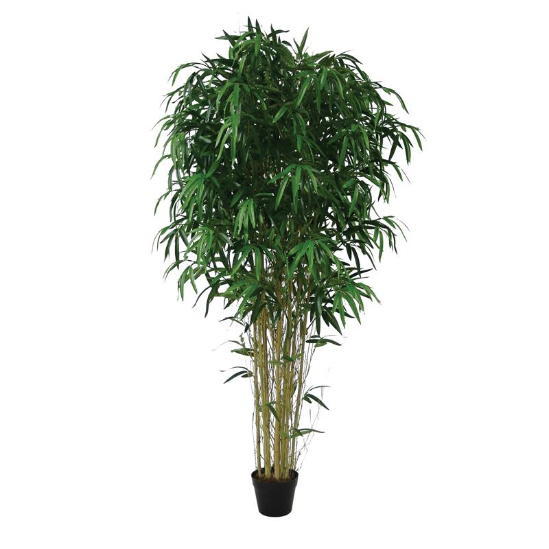 Bambou 175 cm