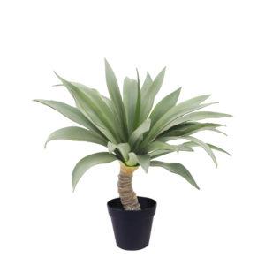 Yucca 55 cm
