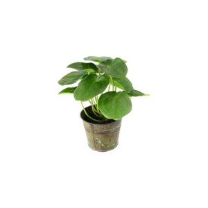 Plante Artificielle pilea